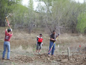 Establishing native grasses to out compete the invasive plants