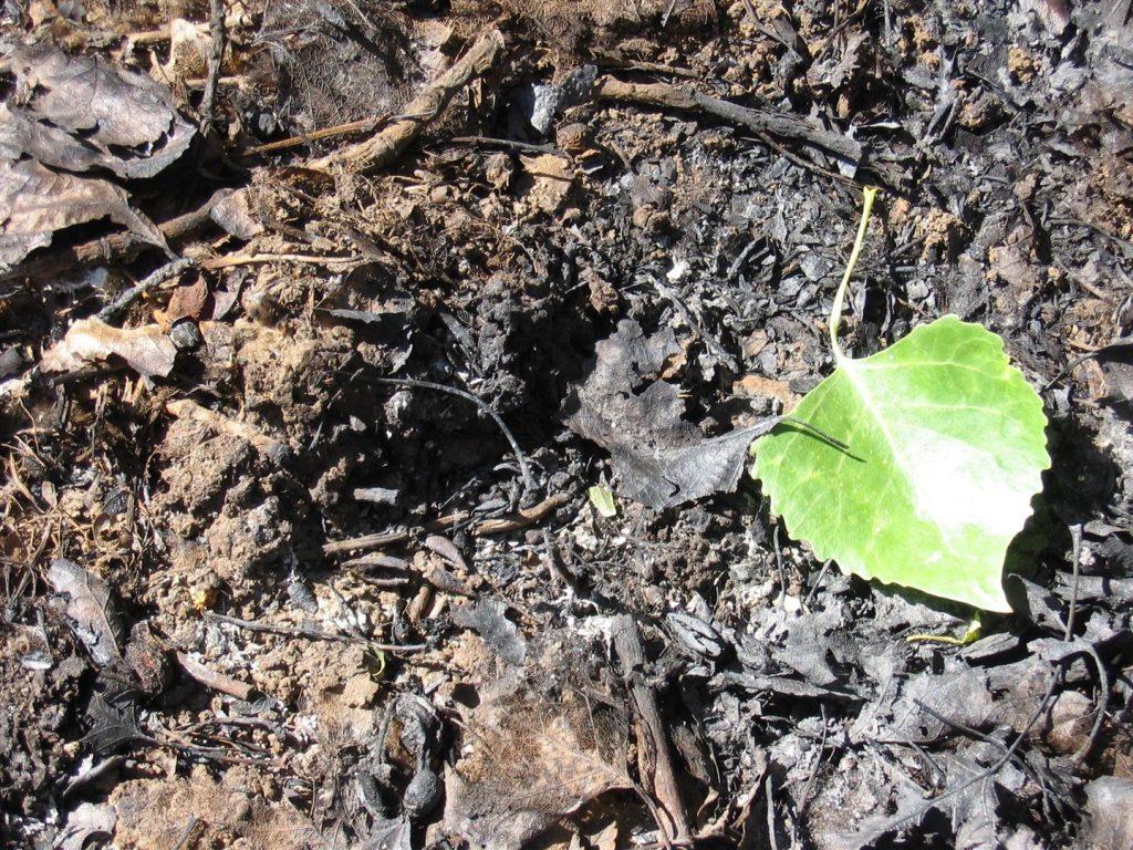 2005 Watson Woods Riparian Preserve Wildfire