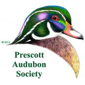 Audubon Logo - Wood Duck - square (Medium)
